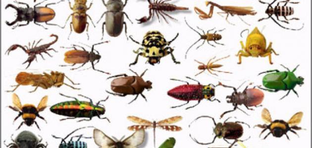 صور حشرات المنزل الصغيرة , اضرار الحشرات علي الانسان والمجتمع