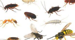 حشرات المنزل الصغيرة , اضرار الحشرات علي الانسان والمجتمع