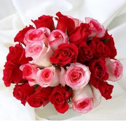 صورة احلى هدايا عيد الحب , افكار تقديم وهدايا عيد الحب 2114 3
