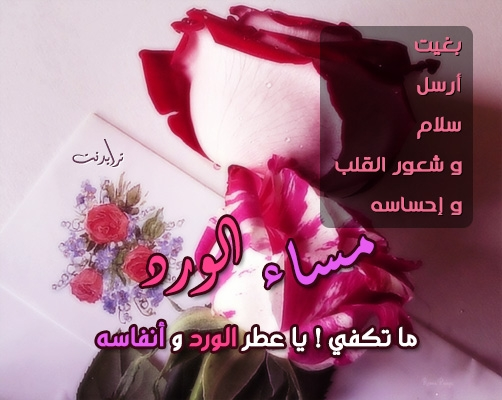 رسائل مساء الحب حبيبي اجمل كلمات ترسلها في المساء لحبيبك دلوعه