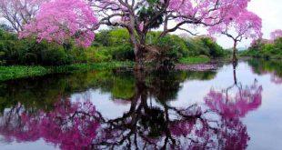 صور صور اشجار جميلة , اجمل الاشجار فى الصور