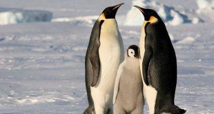 اين يعيش البطريق , نبذه عن حياه البطريق