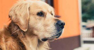 صورة تفسير حلم كلاب , الكلاب وتفسيرها فى المنام