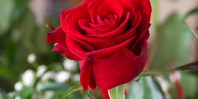 صور اجمل صور الورد , واااااااو احلي ورد