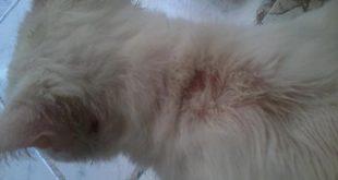 صورة علامات شفاء القطط من الفطريات , ازاى اعرف ان القطط اتشفت من الفطريات