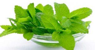 صورة اعشاب لعلاج القولون , اجمل الاعشاب لعلاج القولون