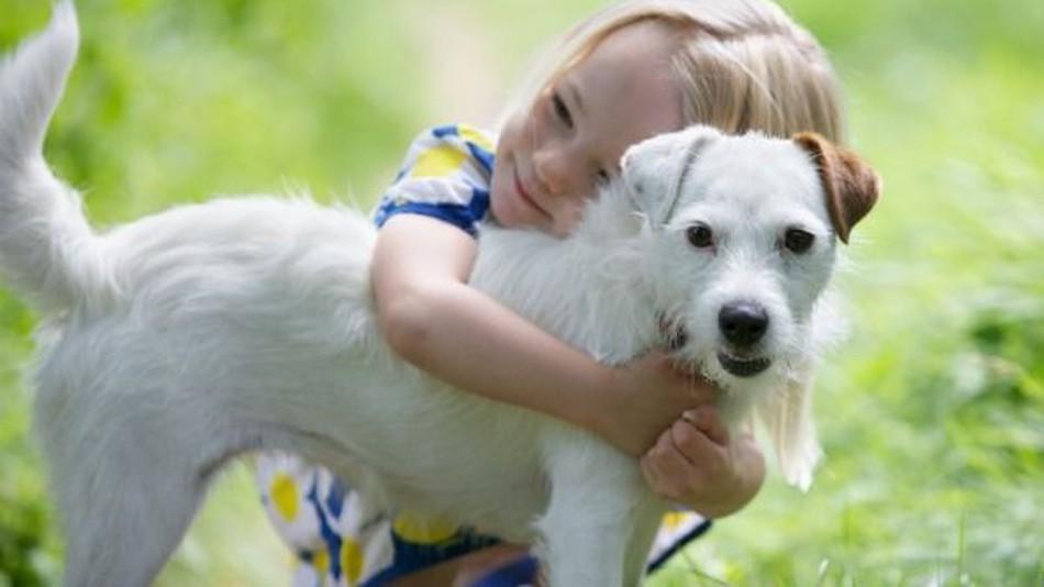 صورة تفسير رؤية الكلب الابيض في المنام , رؤيه الكلاب فى المنام وتفسيرها بالالوان