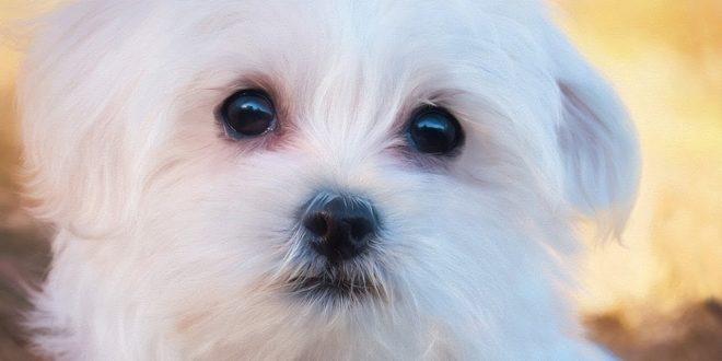 صور تفسير رؤية الكلب الابيض في المنام , رؤيه الكلاب فى المنام وتفسيرها بالالوان