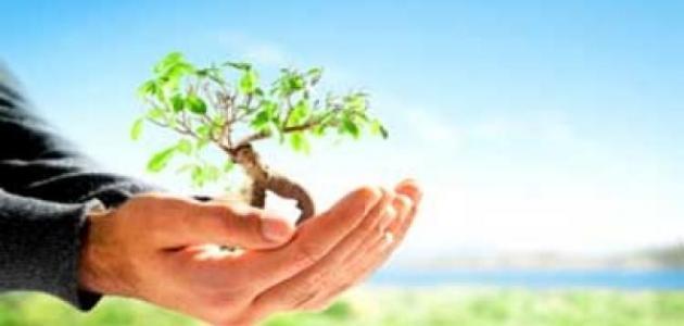 صورة موضوع حول البيئة , بحث مكثف ومختصر عن البيئة والحفاظ عليها 1538 1