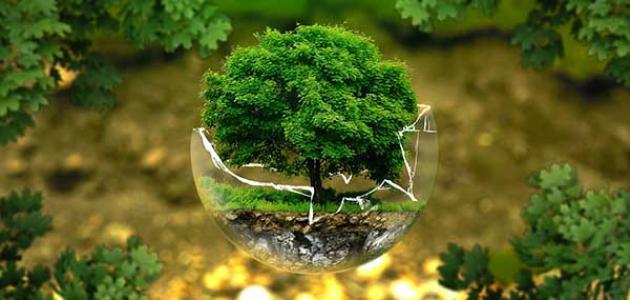 صورة موضوع حول البيئة , بحث مكثف ومختصر عن البيئة والحفاظ عليها 1538 2