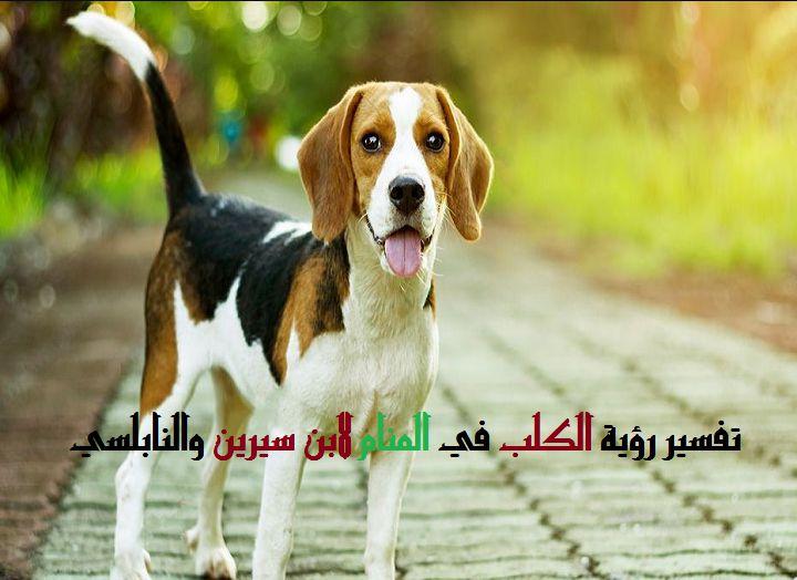 صورة تفسير الاحلام رؤية كلب , شوفت كلب ضخم بيجري ورايا في المنام وخفت اوي