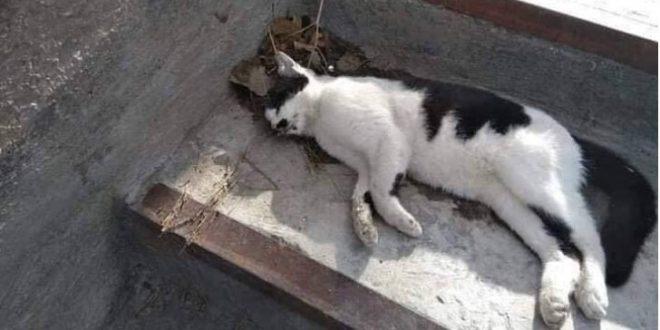 صورة موت القطة في المنام , معنى القطط في الحلم
