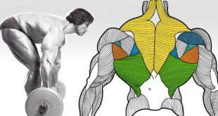 صورة تمارين عضلات الظهر , تقوية عضلات الظهر