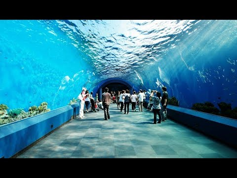صورة صور تحت الماء , تحت الماء حياة اخرى 3624 1