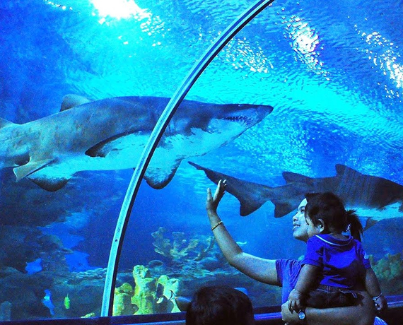 صورة صور تحت الماء , تحت الماء حياة اخرى 3624 4