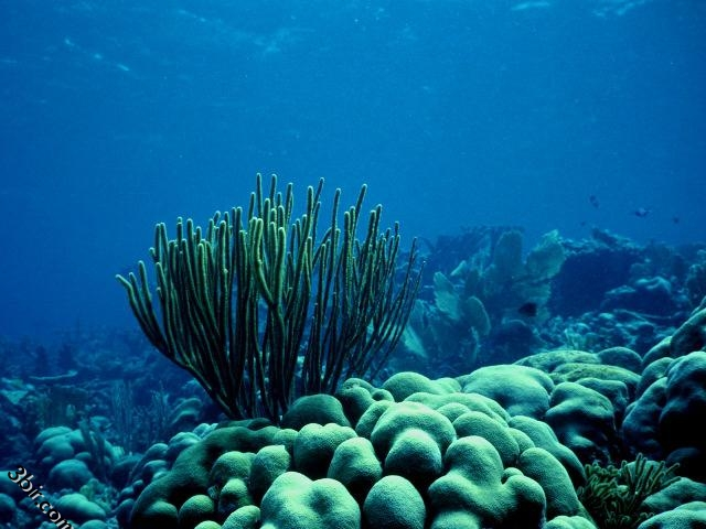 صورة صور تحت الماء , تحت الماء حياة اخرى 3624 5