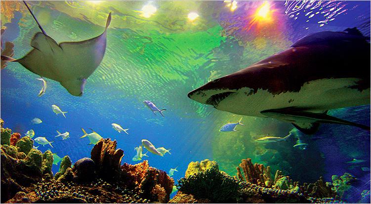 صورة صور تحت الماء , تحت الماء حياة اخرى 3624 6