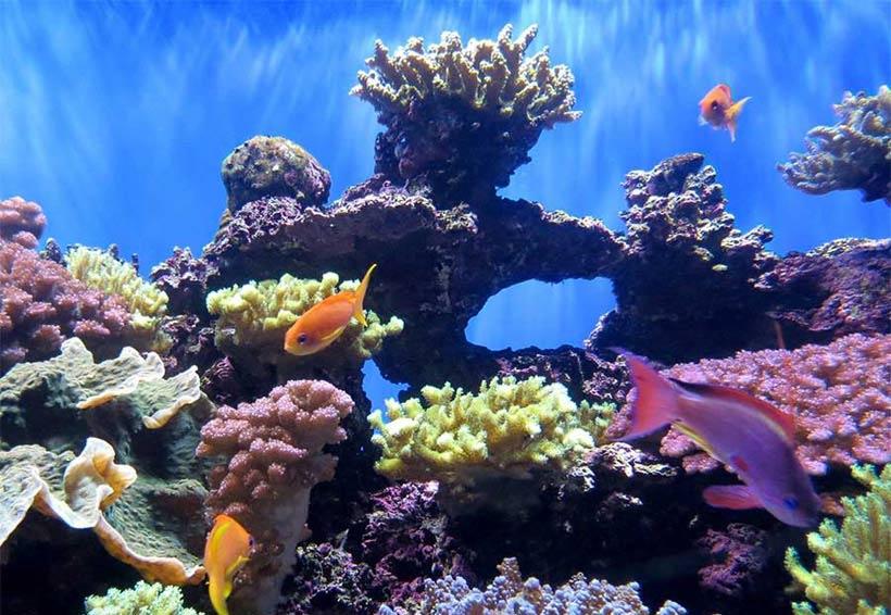 صورة صور تحت الماء , تحت الماء حياة اخرى 3624 7