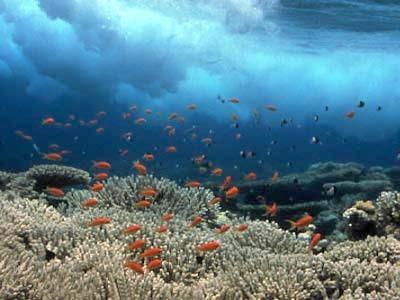 صورة صور تحت الماء , تحت الماء حياة اخرى 3624 8