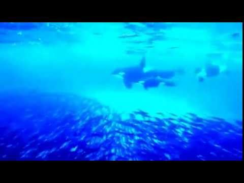 صورة صور تحت الماء , تحت الماء حياة اخرى 3624