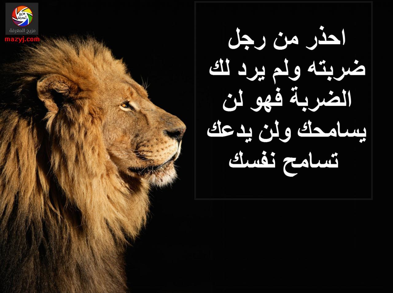صورة شعر عن الاسد , كلمات جميله عن شجاعة الاسد