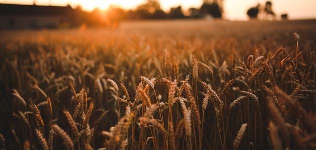 صورة معنى كلمة agriculture , ثقافات البلدان المختلفة