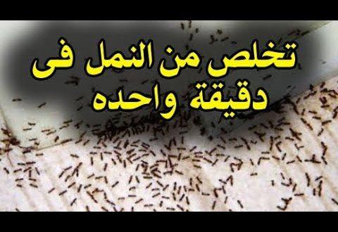 صورة طريقة القضاء على النمل , مشكلة النمل في المنزل
