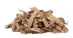 صورة عشبة قسط الهندي , الطب البديل بالاعشاب وفائدته علي الصحه