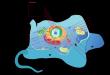 صورة مكونات الخلية الحيوانية , النواه ودورها في نمو وتنشيط الخليه الحيوانيه