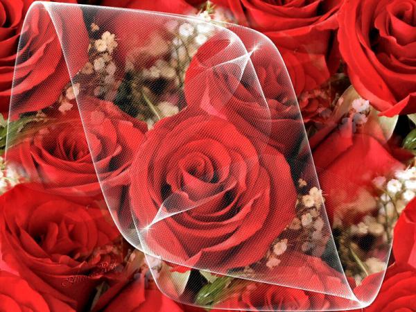 صورة احلى صور للورد , اجمل اشكال باقات الورد