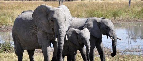صورة ما تفسير الفيل في المنام , ما تاؤيل الفيل في الحلم