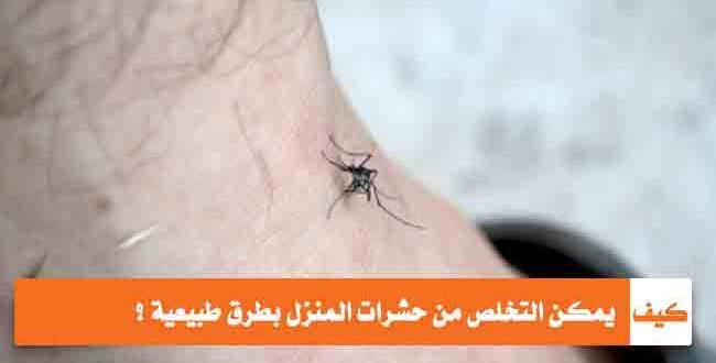 صورة التخلص من الحشرات المنزلية , خلي بيتك نضيف من الحشرات