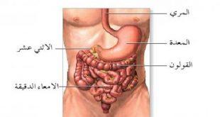 صورة مكان المعدة في الجسم , اين تقع المعده في جسم الانسان