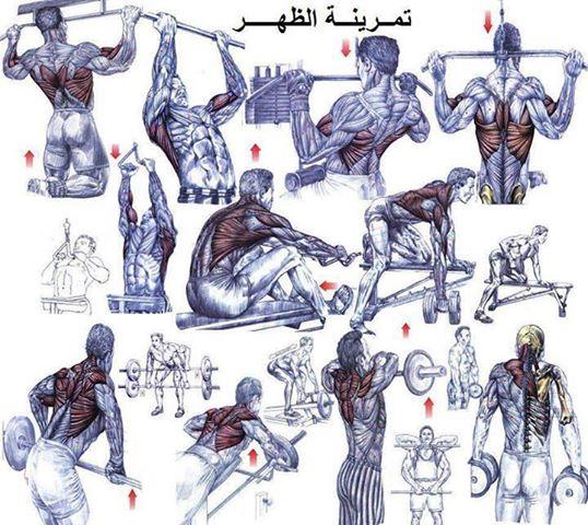 صورة تمارين كمال اجسام بالصور , اكثر التمارين لكمال لاجسام 4023