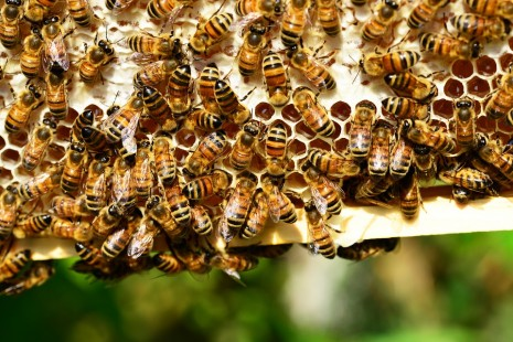 صورة تفسير لسعة النحل في المنام , تاؤيل لسعة النحل في المنام