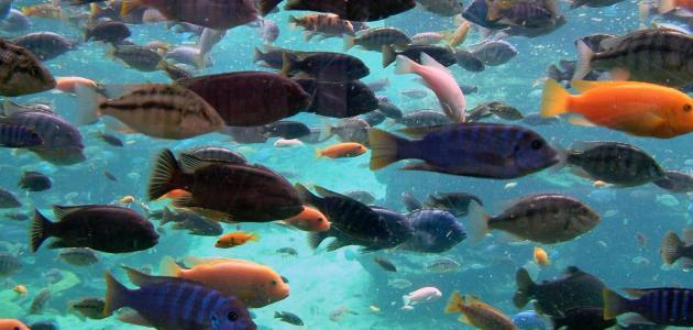 صورة سمك في الحلم , ارى سمكه دائما في المنام