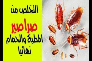 صورة القضاء على صراصير المطبخ , تخلصي من الحشرات