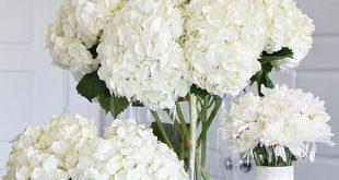 صورة ورود جميلة بيضاء , اجمل ورده في الكون