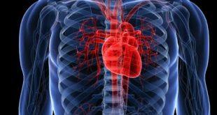 صورة وظيفة القفص الصدري , اهمية وجود القفص الصدري