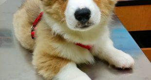 صورة صور كلاب جميلة , اجمل كلاب العالم