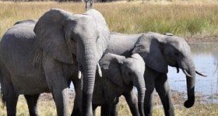 صورة الفيل في الحلم , رؤية الحيوانات في المنام