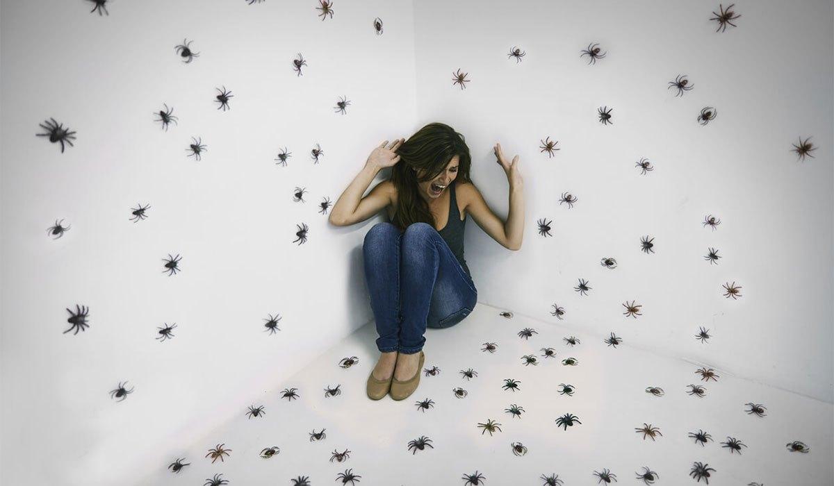 صورة تفسير الحشرات في المنام , هل تهاجمك الحشرات فى منامك