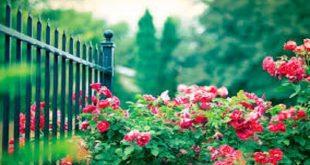 صورة تعبير عن الحدائق , موضوع مبهج عن المساحات الخضراء