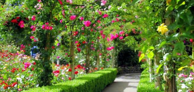 صورة تعبير عن الحدائق , موضوع مبهج عن المساحات الخضراء 1916 3