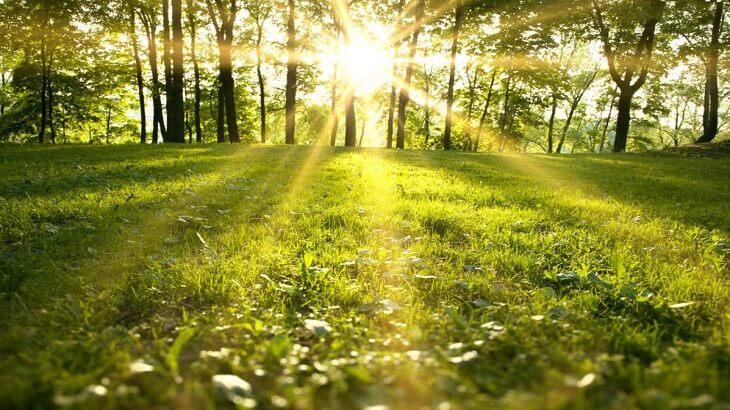 صورة تعبير عن الحدائق , موضوع مبهج عن المساحات الخضراء 1916 8
