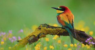 صورة صور طيور جميله , اجمل ما ترى من الطيور