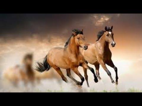 صورة تفسير حلم رؤية الحصان البني الهائج, معنى رؤية الحصان في المنام