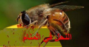 صورة رؤية النحل في المنام , رؤية خير أم شر