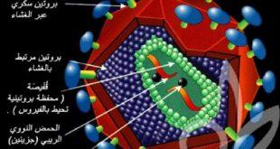صورة هل ينتقل الايدز من اول ممارسة , وسائل نقل العدوى