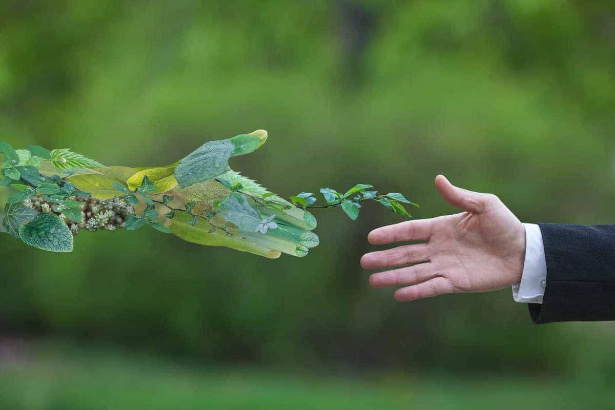 صورة كيف تحافظ على البيئه بكلمات مؤثرة , عبارة عن المحافظة على البيئة